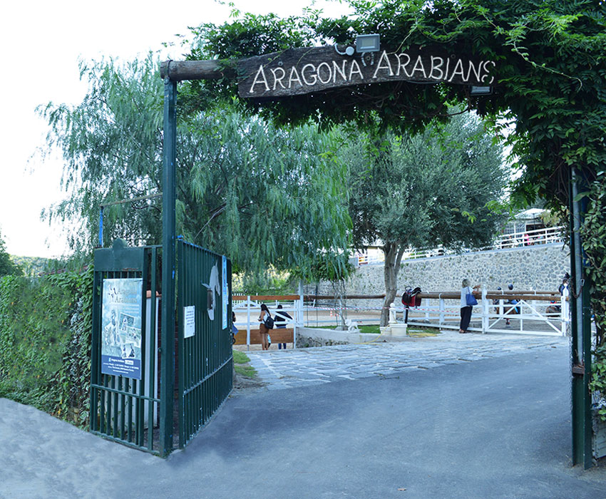 Il Maneggio Aragona Arabians
